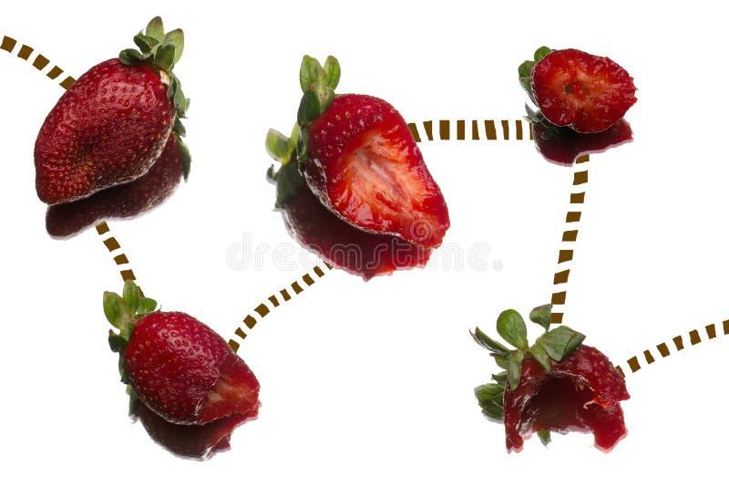 Die Weise der Erdbeere stockfoto