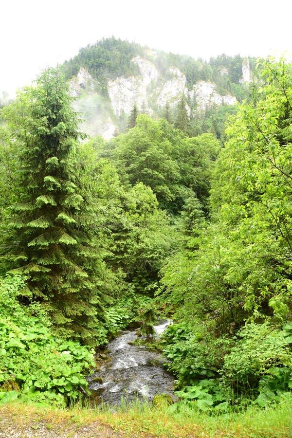 Die Weise des Flusses vom Wald stockbild