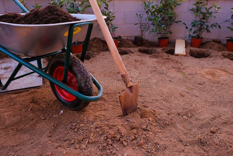 Die Werkzeuge für das Pflanzen einer Hecke: Schaufel und Karren Photinia rot lizenzfreies stockbild