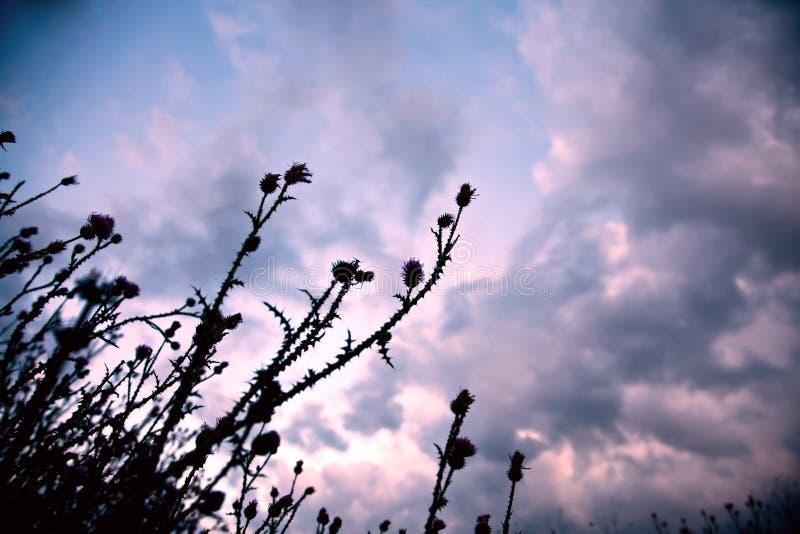 Die Wiese nach Sonnenuntergang lizenzfreies stockbild
