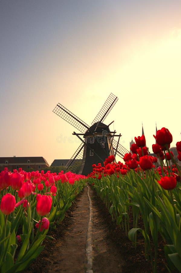 Die Windmühle und die Tulpe lizenzfreies stockbild