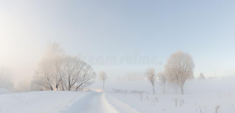 Die Winterbäume, die nahe mit Hoar am Morgen bedeckt wurden, beleuchteten mit sunligh lizenzfreies stockbild