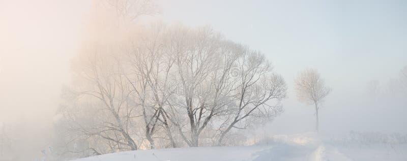 Die Winterbäume, die mit Hoar am Morgen bedeckt wurden, beleuchteten mit Sonnenlicht lizenzfreie stockbilder