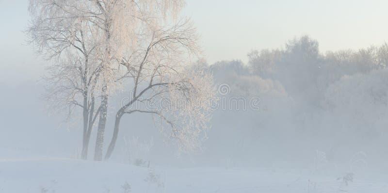 Die Winterbäume, die nahe mit Hoar am Morgen bedeckt wurden, beleuchteten mit sunligh lizenzfreies stockfoto