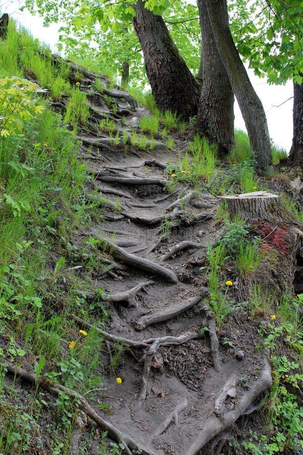 Die Wurzeln eines Naturparks lizenzfreie stockfotos