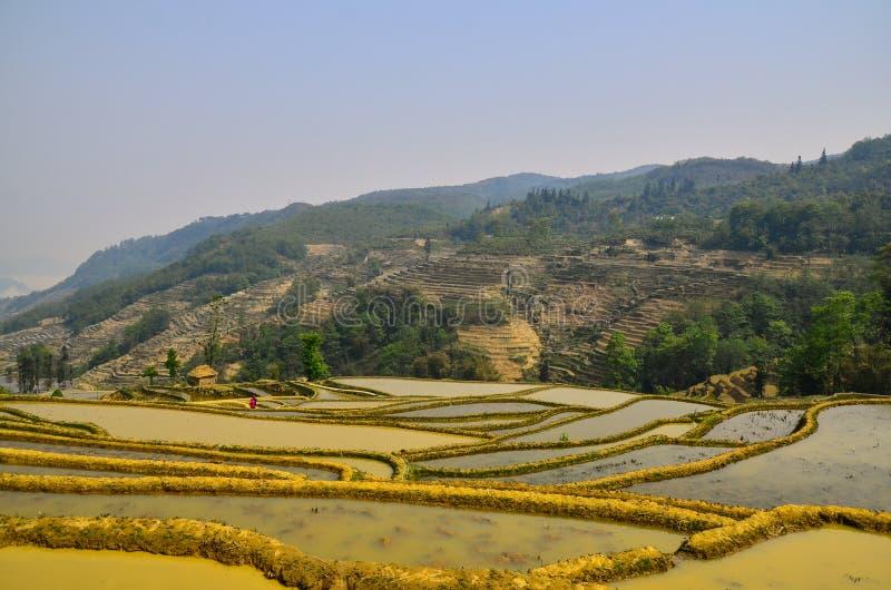Die Yuanyang Rice Terraces haben nicht so viele Schichten, aber sie sind hervorragend für ihre grandiose Gegend mit flacheren Hän lizenzfreie stockfotografie