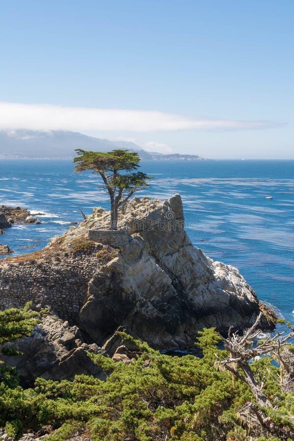 Die Zypresse auf dem Felsen lizenzfreie stockfotos