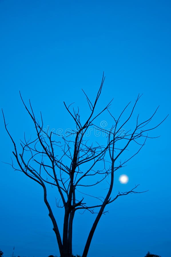 Died Tree Royalty Free Stock Images