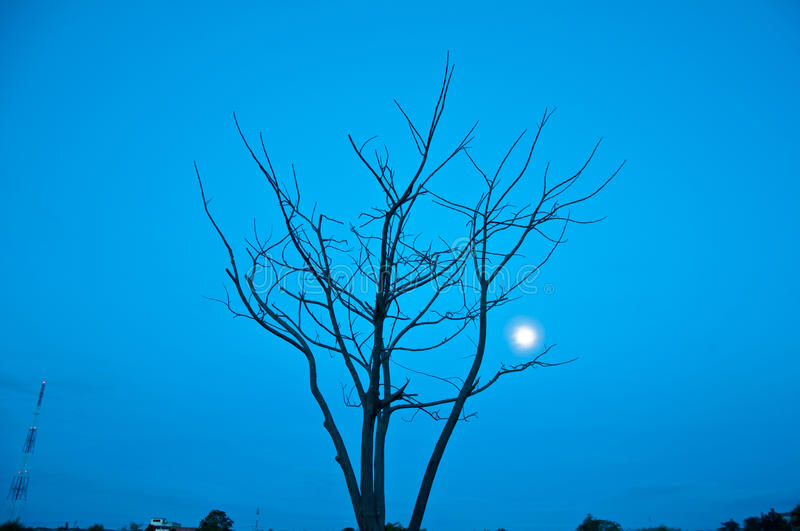 Download Died tree and post stock photo. Image of dark, color - 26752998