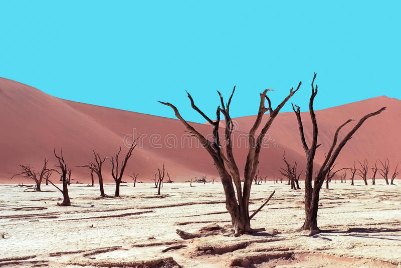 Download Died trees in desert stock photo. Image of africa, view - 12422004