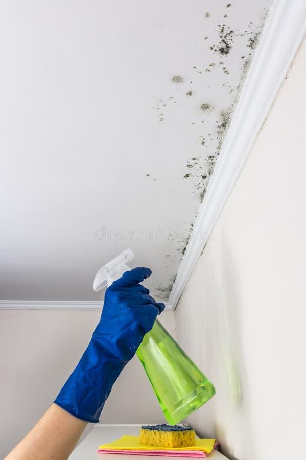 Dien de blauwe rubbervloeistof van de handschoen bespuitende anti-paddestoel op vormvorming op in woonkamerplafond royalty-vrije stock fotografie