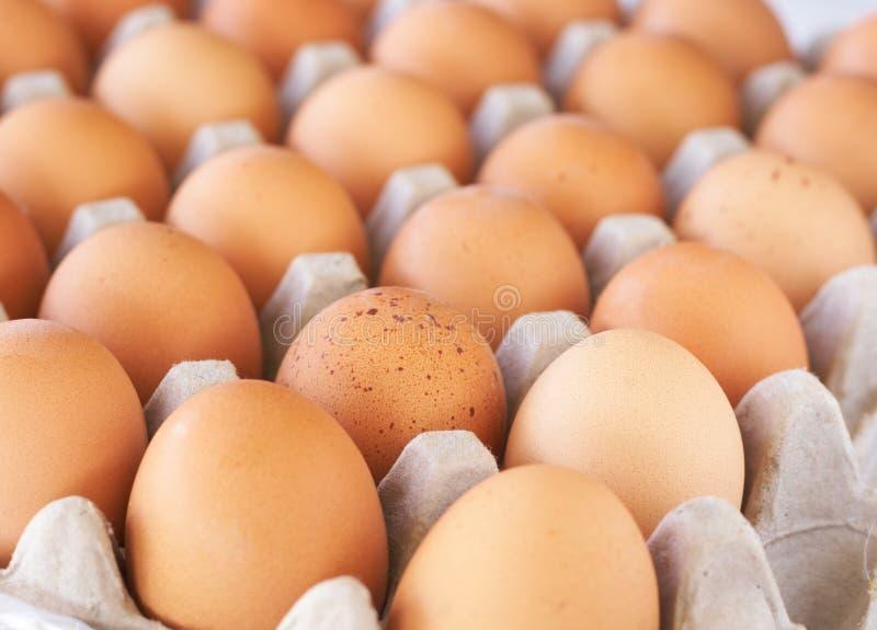Dienblad van eieren royalty-vrije stock afbeeldingen