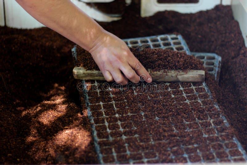 Dienbladen voor zaadgerminatie, samen met shell van de grondkokosnoot royalty-vrije stock foto's