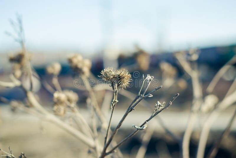Dienst in het droge gras in de vroege lente royalty-vrije stock afbeelding