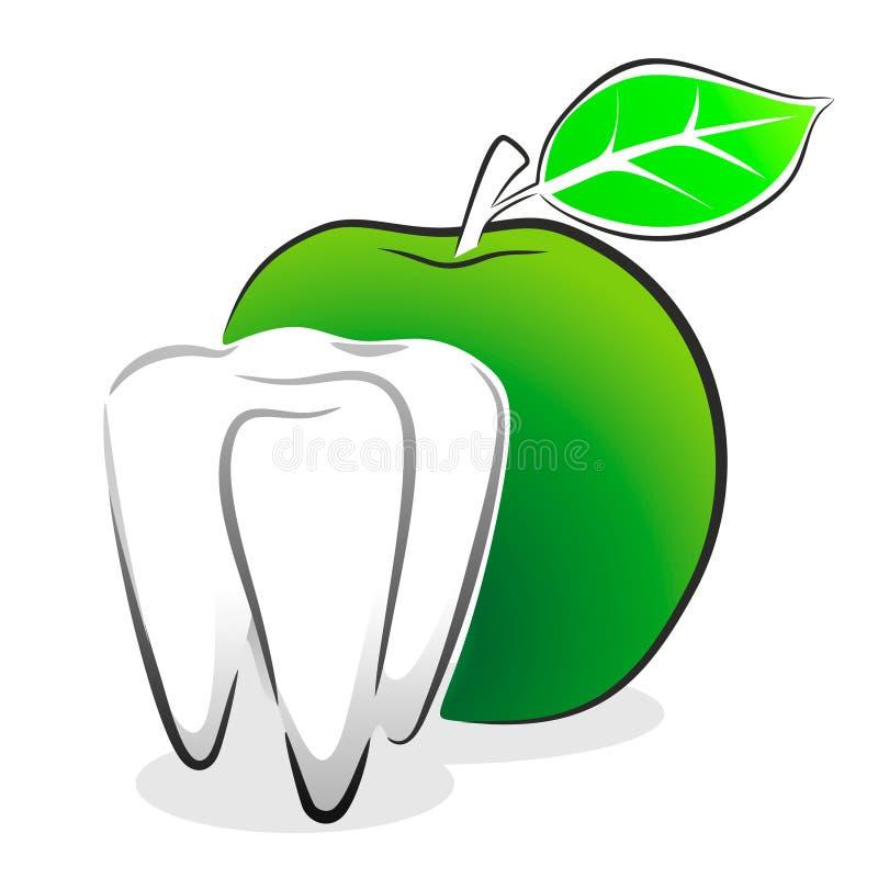 diente ilustración del vector