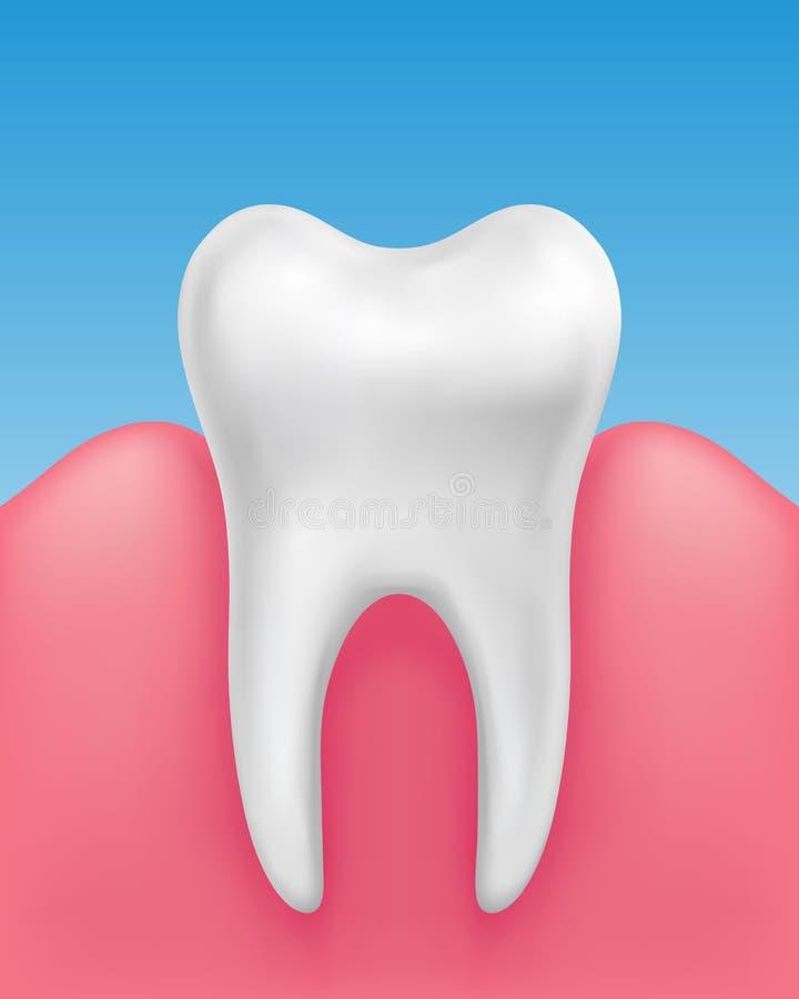 Diente blanco del vector solo en gomas sanas en el fondo azul - estomatología, higiene dental ilustración del vector