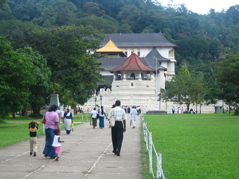 Diente de Kandy foto de archivo