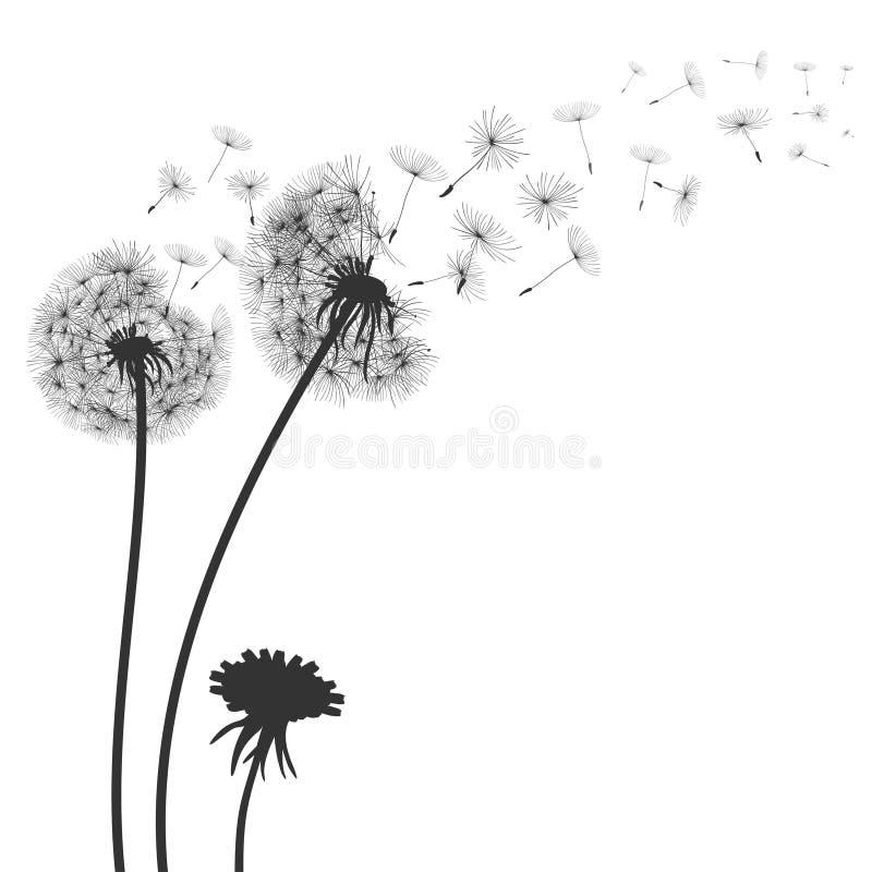 Diente de león negro abstracto, semillas del vuelo del diente de león - para la acción ilustración del vector