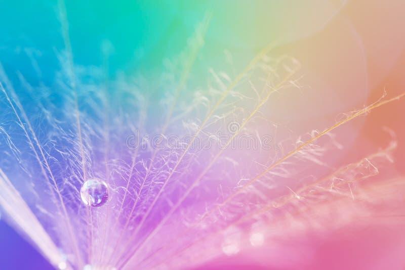 Diente de león y gota de rocío en fondo colorido Macro hermosa y elegante foto de archivo