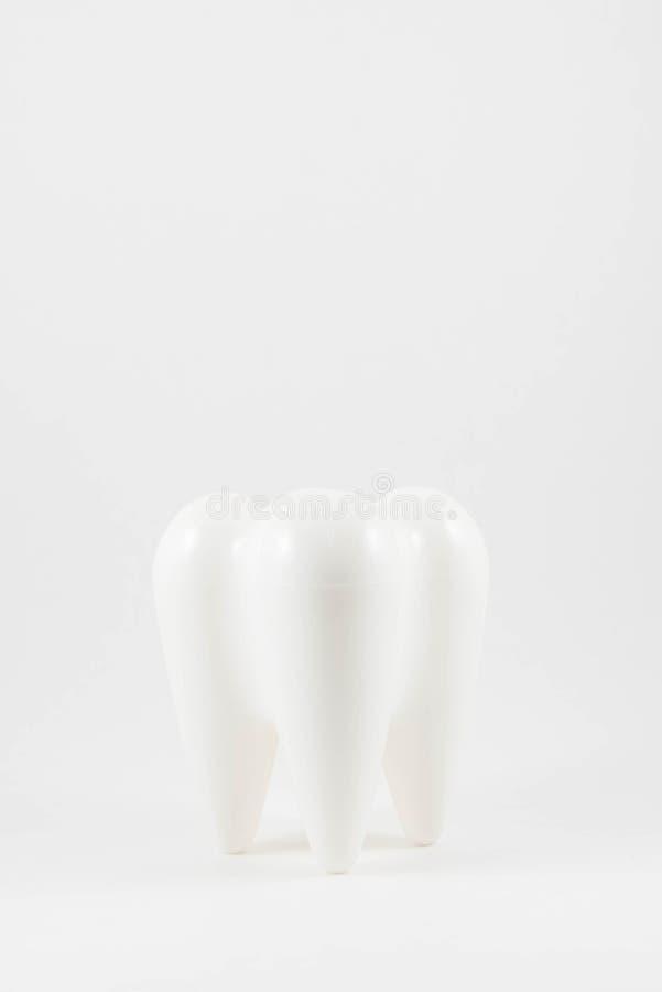 Diente modelo blanco fotos de archivo libres de regalías
