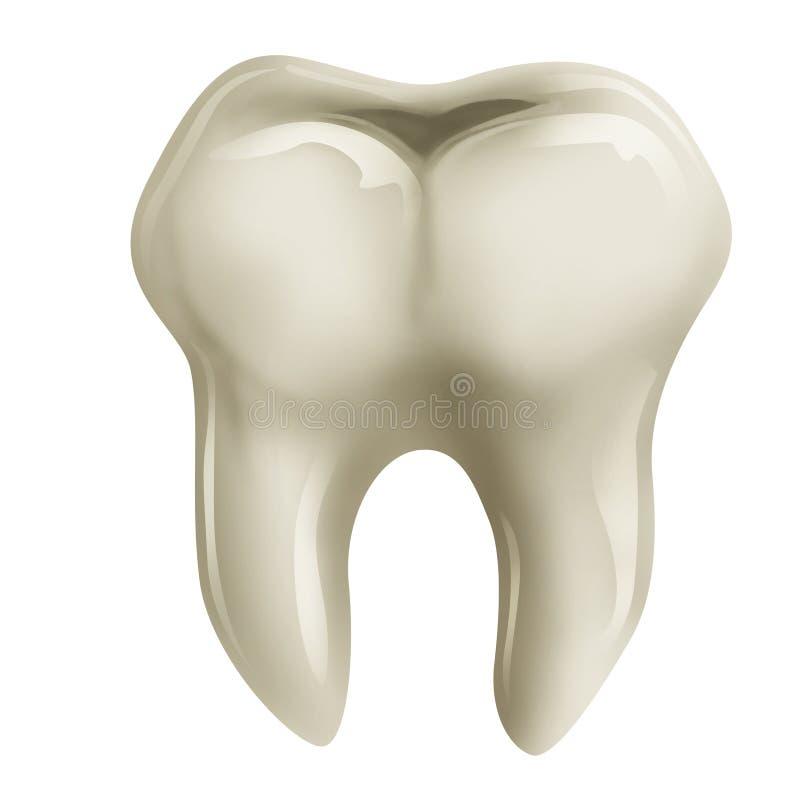 Diente molar stock de ilustración
