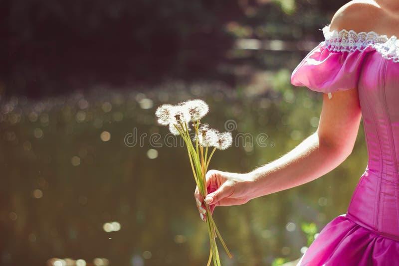 Dientes de león en una mano de la muchacha soleada, primer foto de archivo libre de regalías