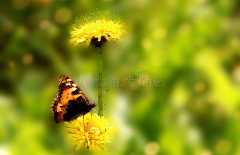 Dientes de león y mariposa mágicos bajo resplandor del sol imagen de archivo libre de regalías