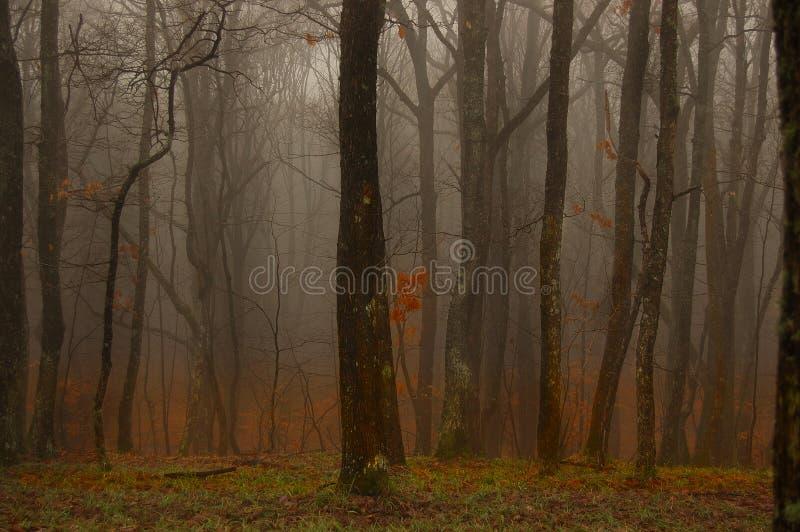 Diep in het bos stock afbeelding