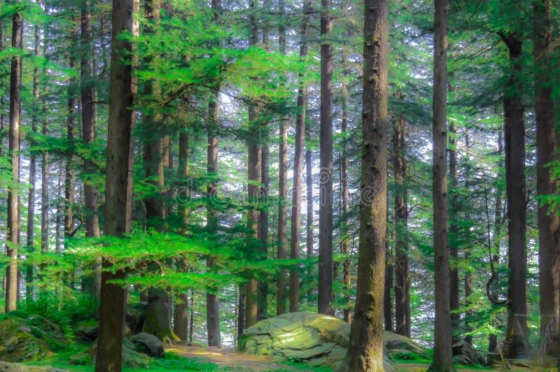 Diep in het Hout Bebost bosbomen gouden zonlicht vóór zonsondergang met zonstralen die door bomen op bosvloer gieten illuminat royalty-vrije stock afbeeldingen