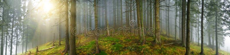 Diep houten panorama stock afbeelding
