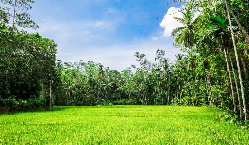 Diep wildernisbos van Sri Lanka stock afbeeldingen
