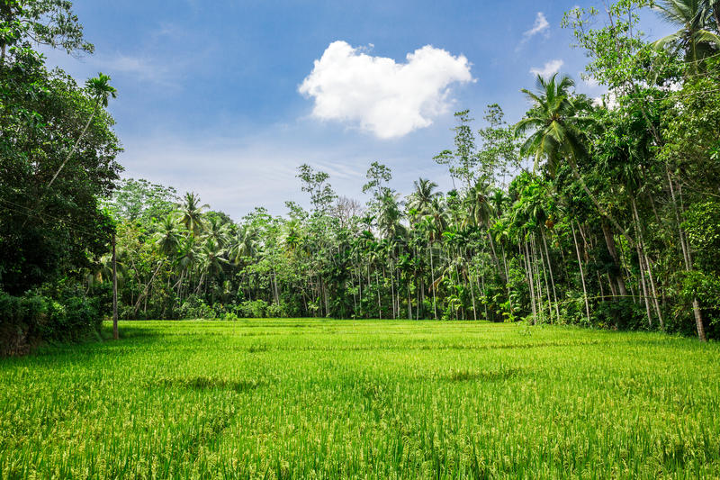 Diep wildernisbos van Sri Lanka stock afbeelding