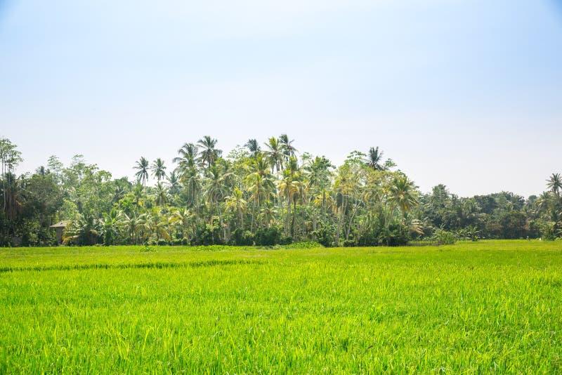 Diep wildernisbos van Sri Lanka royalty-vrije stock afbeeldingen