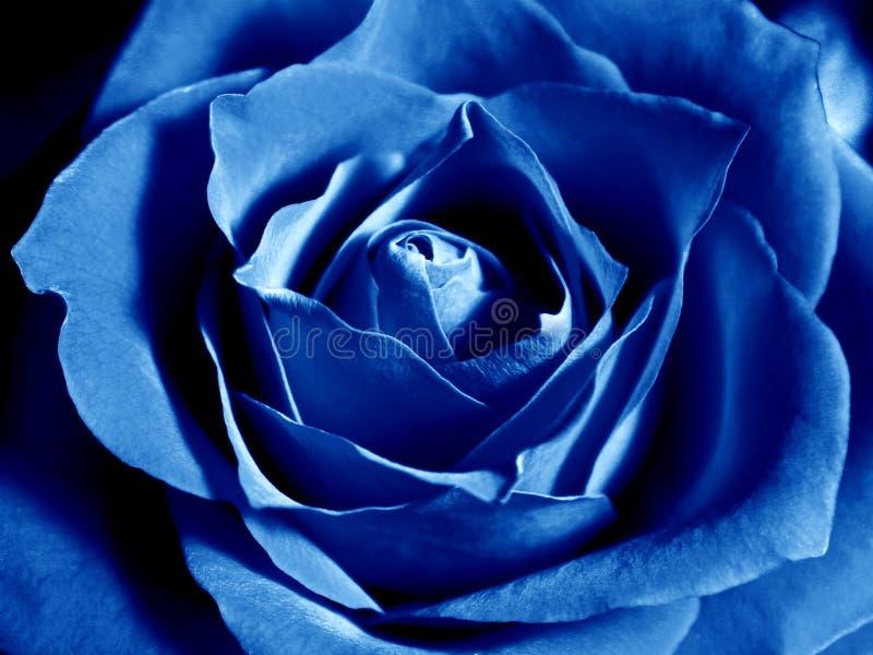 Diepe blauw nam toe stock afbeelding