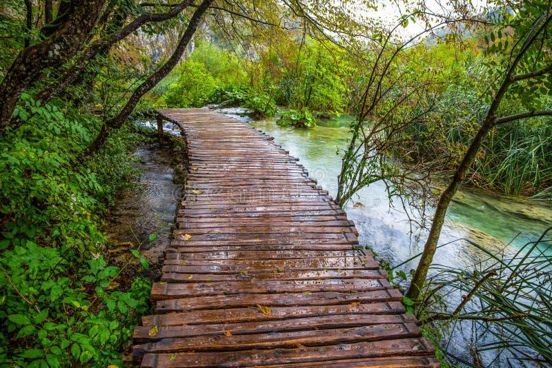 Diepe bosstroom Glashelder water De Meren van Plitvice, Kroatië royalty-vrije stock fotografie