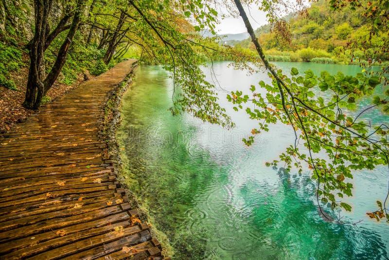 Diepe bosstroom Glashelder water De Meren van Plitvice, Kroatië stock foto's