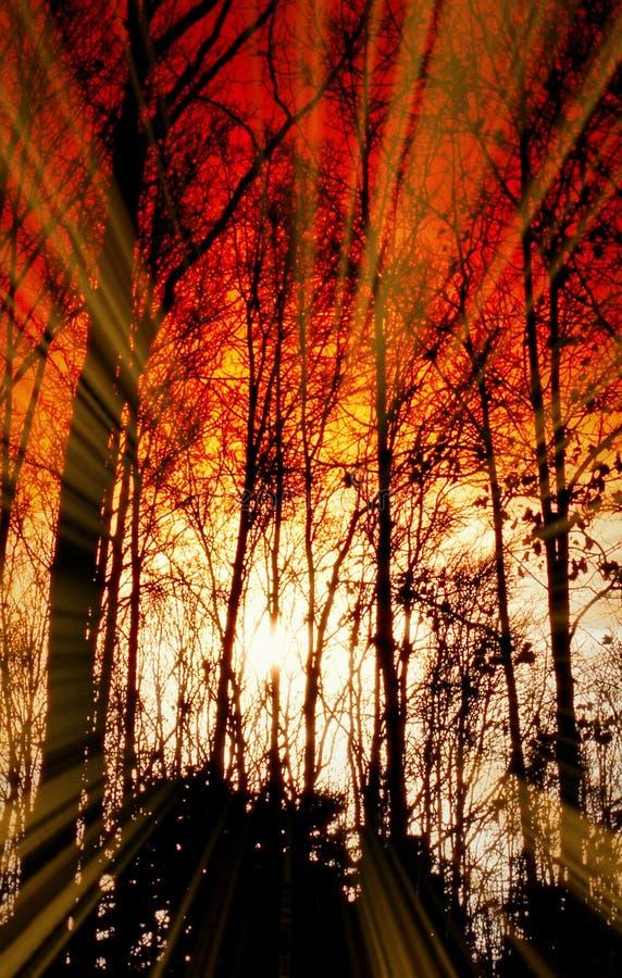 Diepe de Kleurenroest van fantasieforest sihlouetted trees sunrise sunset royalty-vrije stock afbeelding