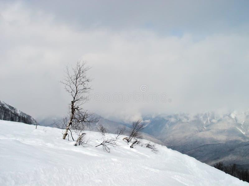 Diepe sneeuw royalty-vrije stock foto's