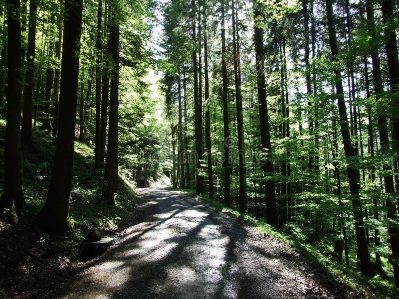 Diepe zonneschijnschaduwen binnen het vergoelijkte bos stock foto