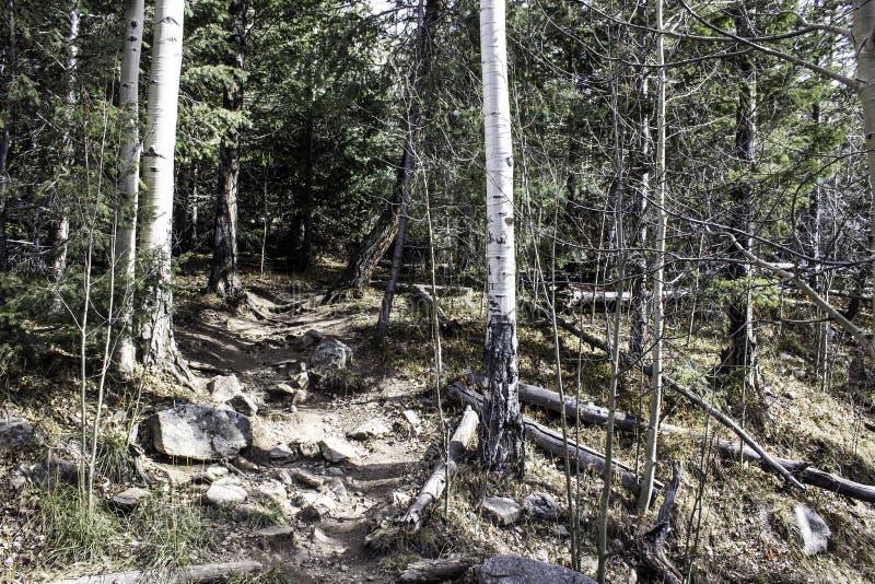Dieper in het Bos stock fotografie