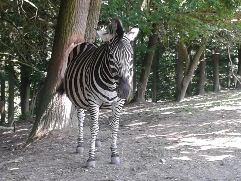 dier op safari stock foto