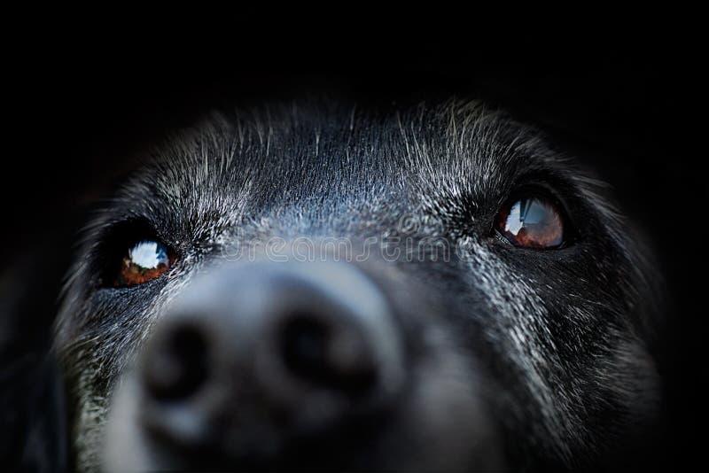Dier - oude hond royalty-vrije stock foto