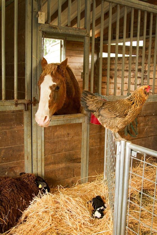 Dieren bij het landbouwbedrijf royalty-vrije stock afbeeldingen