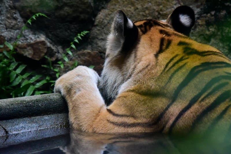 Dieren in de khaokheow open dierentuin stock afbeelding