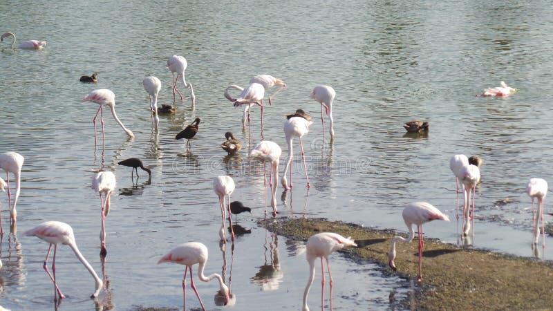 Dieren in de wildernis stock afbeeldingen