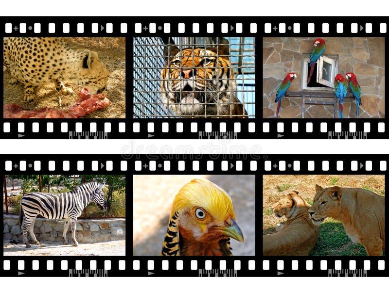Dieren in frames van film royalty-vrije stock foto's