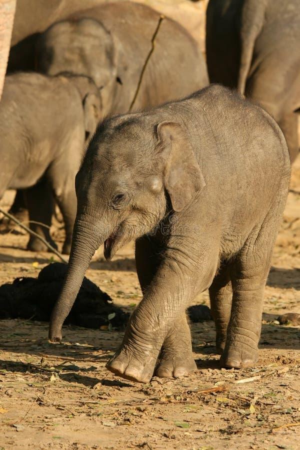 Dieren: gelukkig weinig babyolifant stock foto