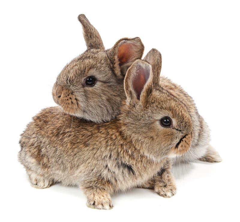 dieren Konijn dat op een witte achtergrond wordt geïsoleerd royalty-vrije stock foto
