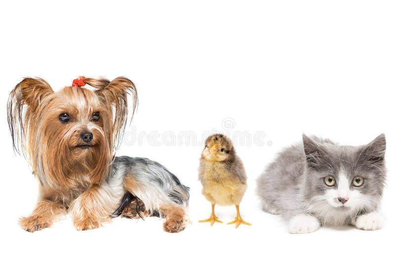 Dieren op een witte achtergrond royalty-vrije stock foto's