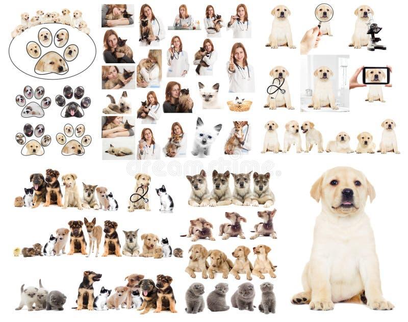 dierenarts stock afbeelding